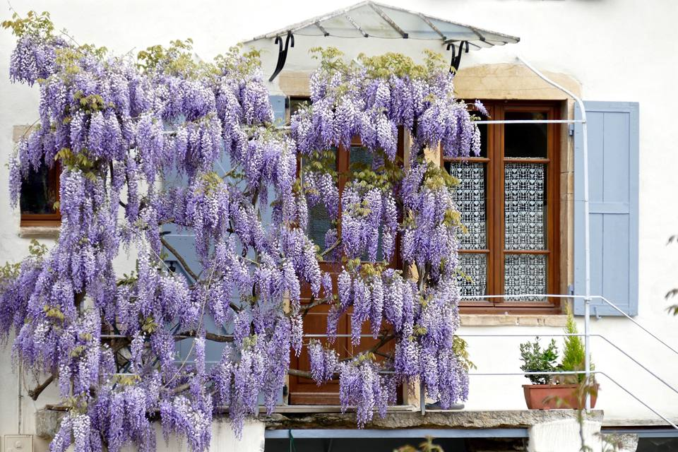 Design ideas for flowering vines mightylinksfo