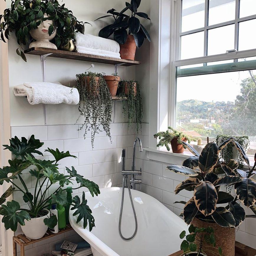 bathroom clawfoot tub with plants