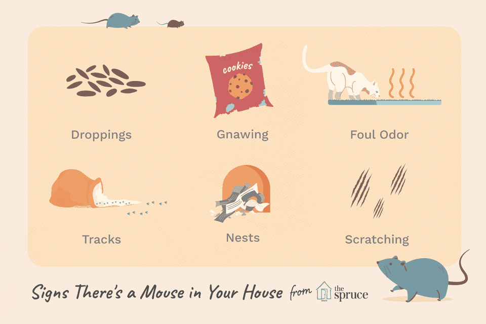 signs of mice in the home