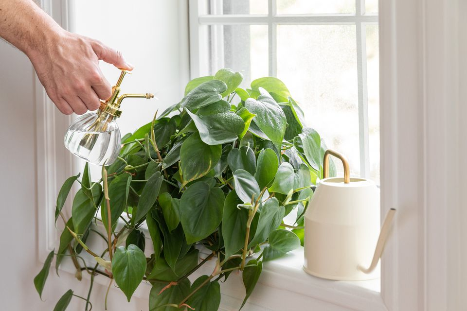 tips for properly watering your houseplants