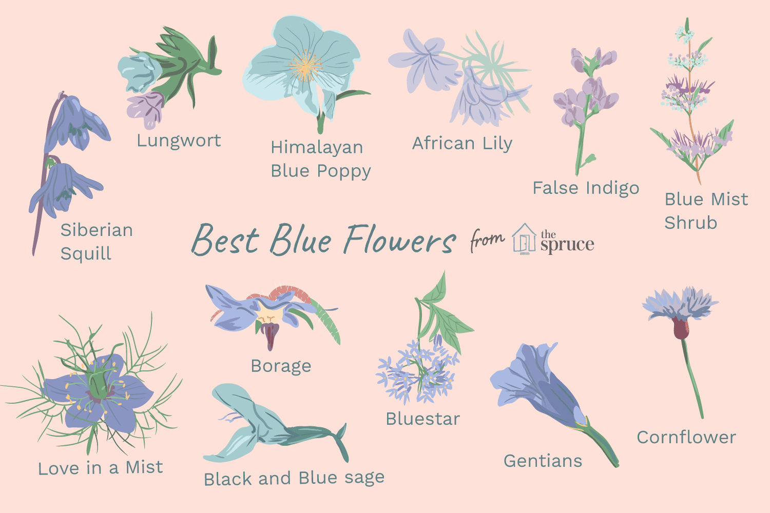 12 Types Of Garden Plants With Blue Flowers
