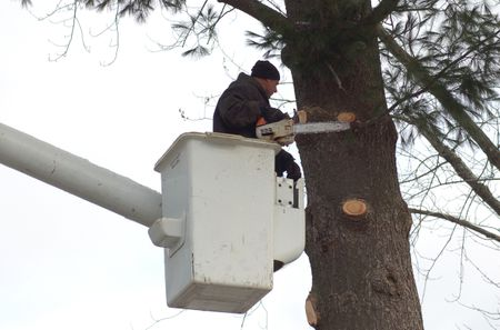 How to Hire Tree Services: First-Timer Hiring Tips