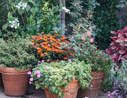 Orange ceramic containers with colorful flowers in a garden