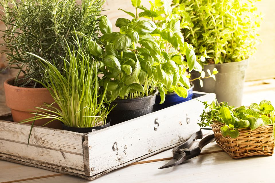 A box full of herbs