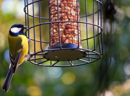 the 8 best squirrel proof bird feeders to buy in 2018