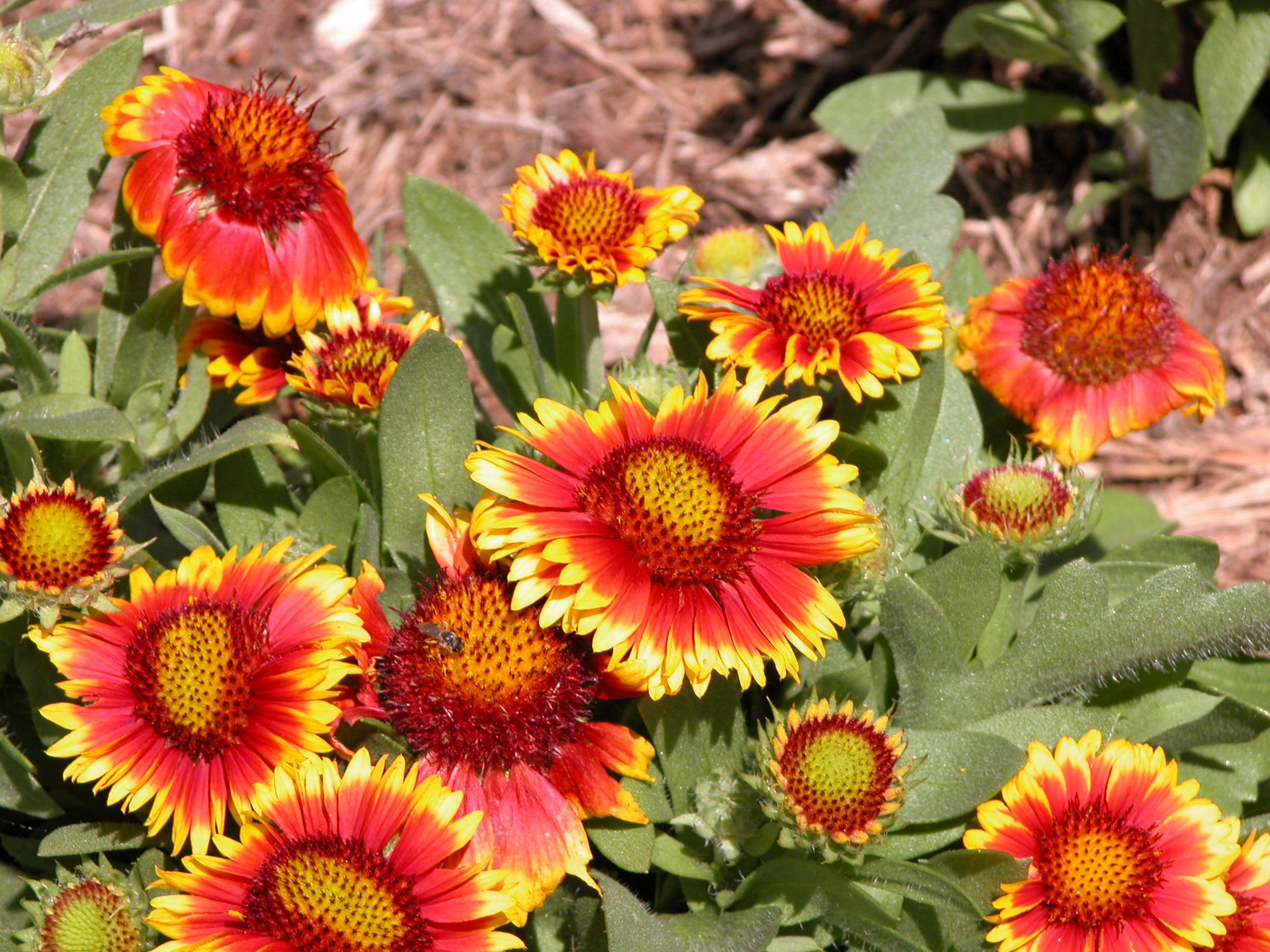 10 Perennial Flowers To Start From Seed
