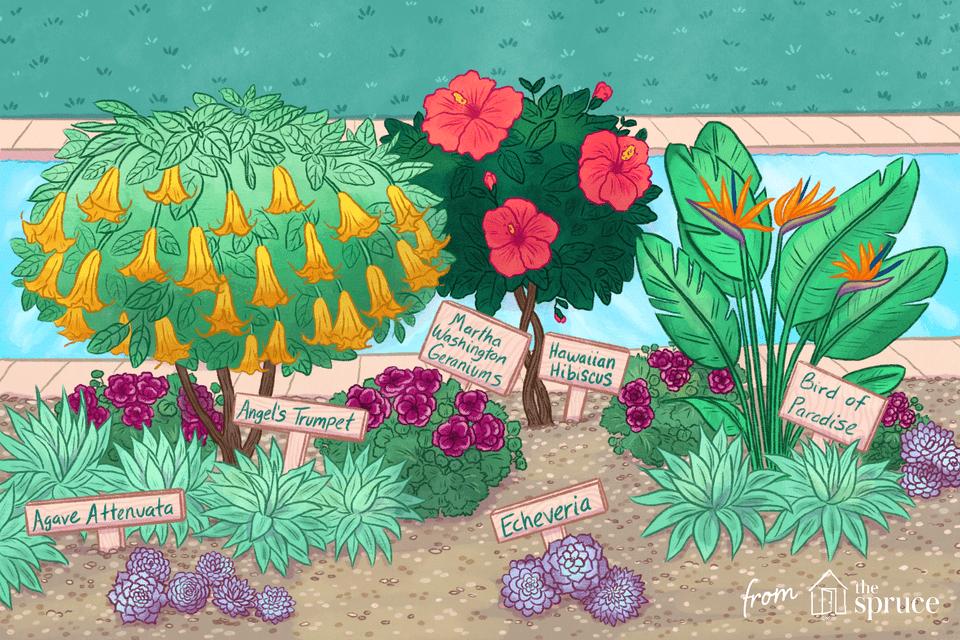Ilustración de plantas junto a la piscina