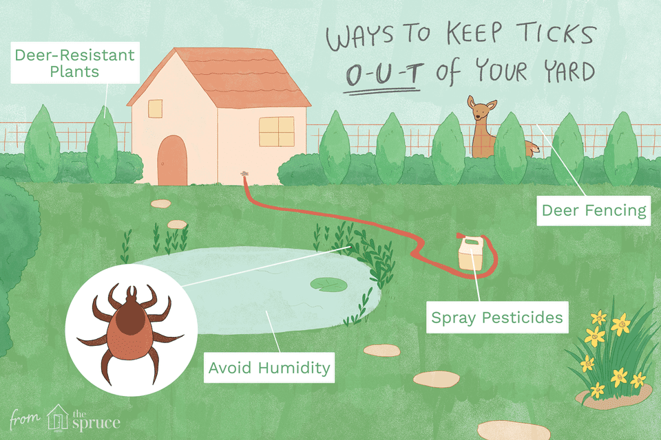 How to get rid of ticks in your yard illustration