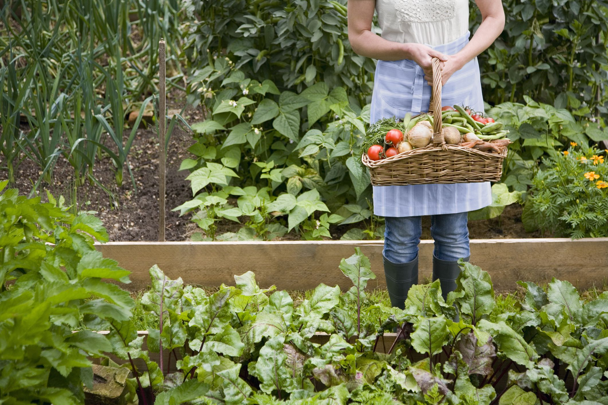 6 Things To Consider When Planning A Vegetable Garden