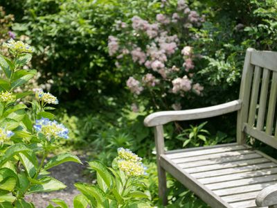 English Garden - Hydrangeas in focus, beginning to bloom in blue, paired with a wooden bench