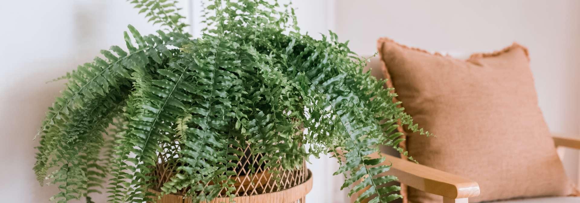 styled fern