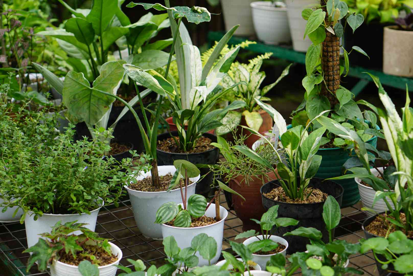 groups of container plants