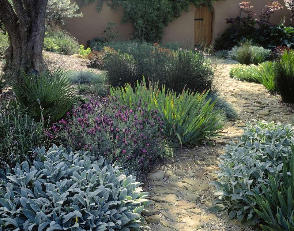 Texture in a garden
