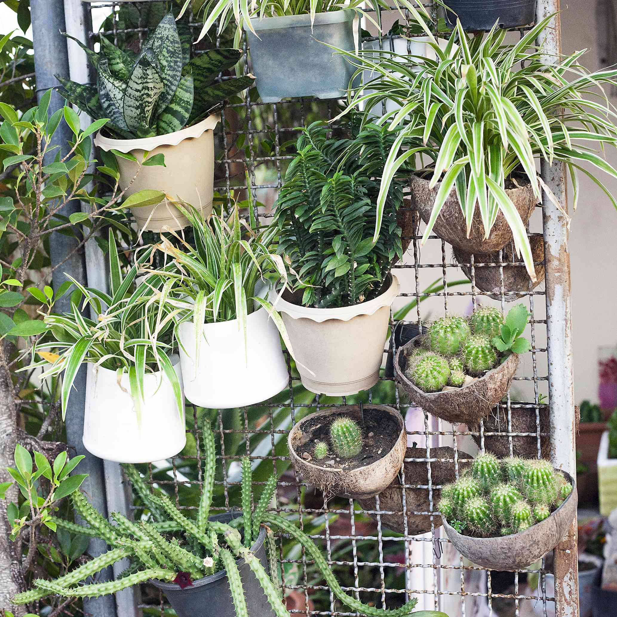 A metal screen with various hanging potted plants.