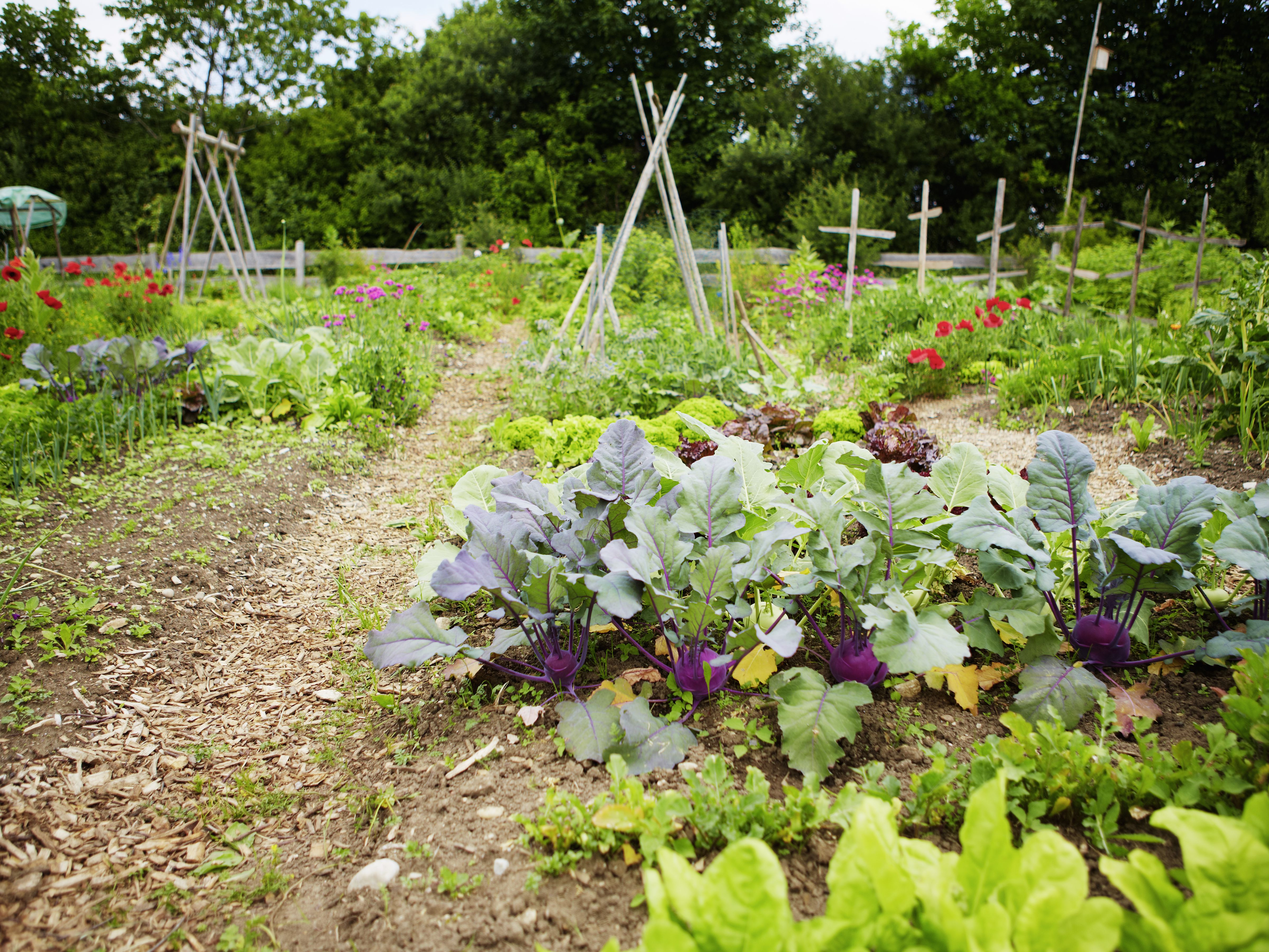 How To Prepare For A Fall Vegetable Garden