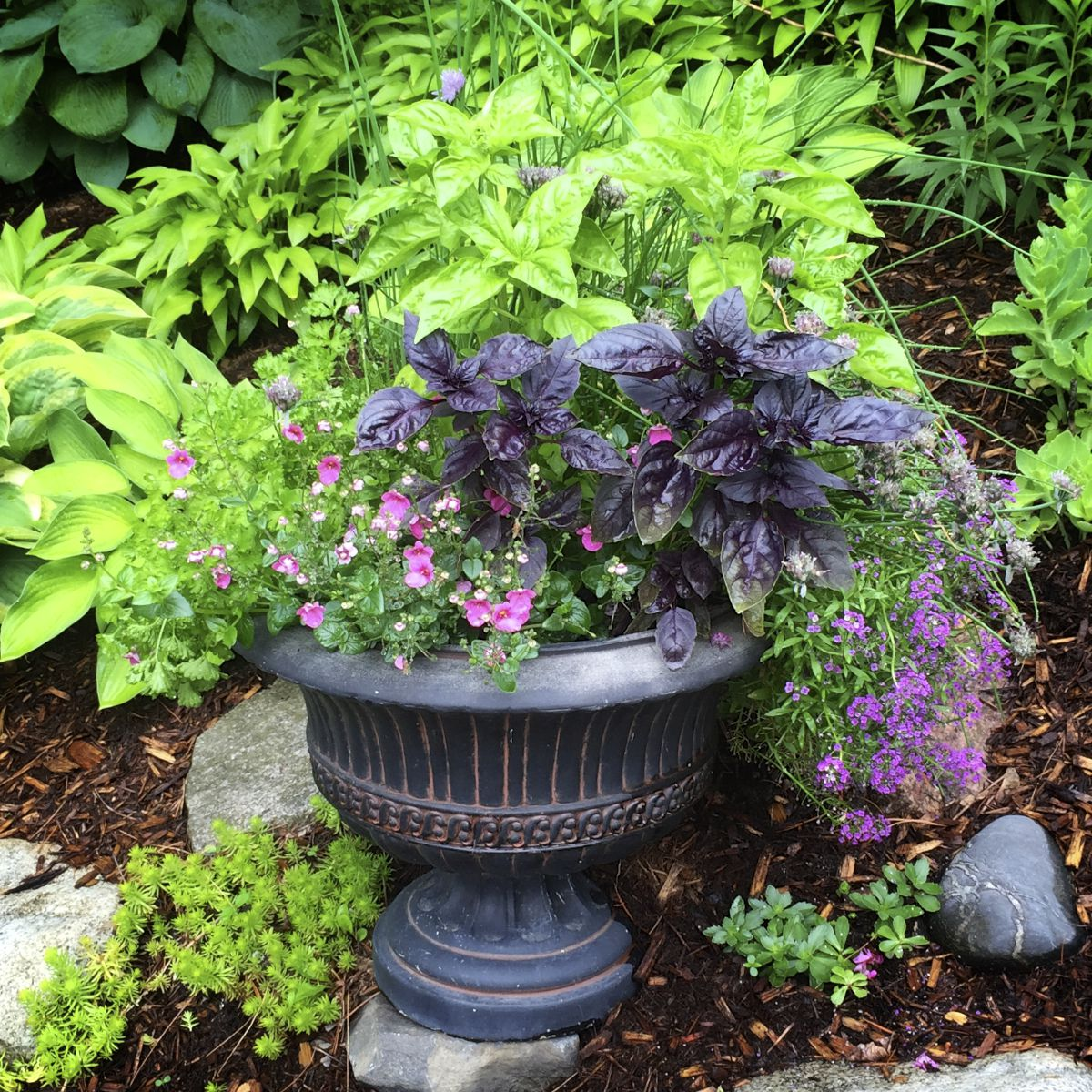 Home Design Ideas Decorating Gardening: Tips For Growing Basil In Containers