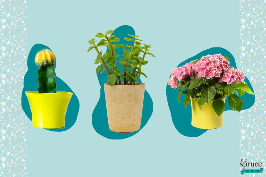 Photo composite of a cactus, a jade plant, and a flowering plant over a teal backdrop.