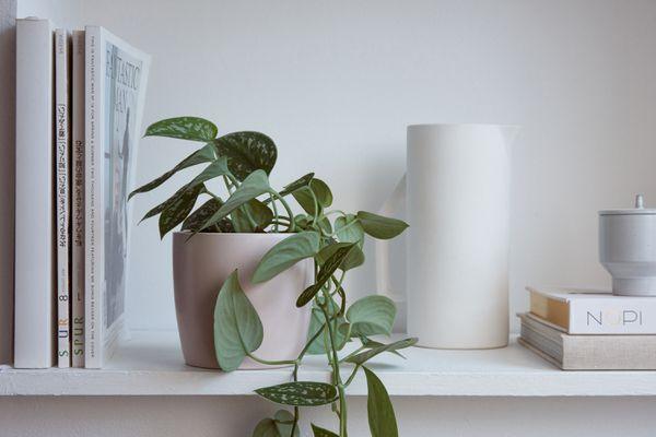 a vine arranged on a shelf
