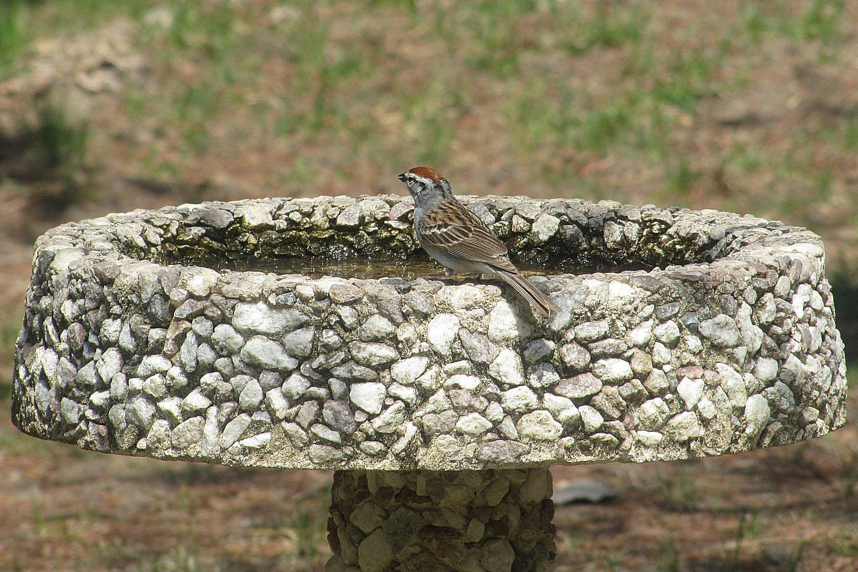 All About Concrete Bird Baths