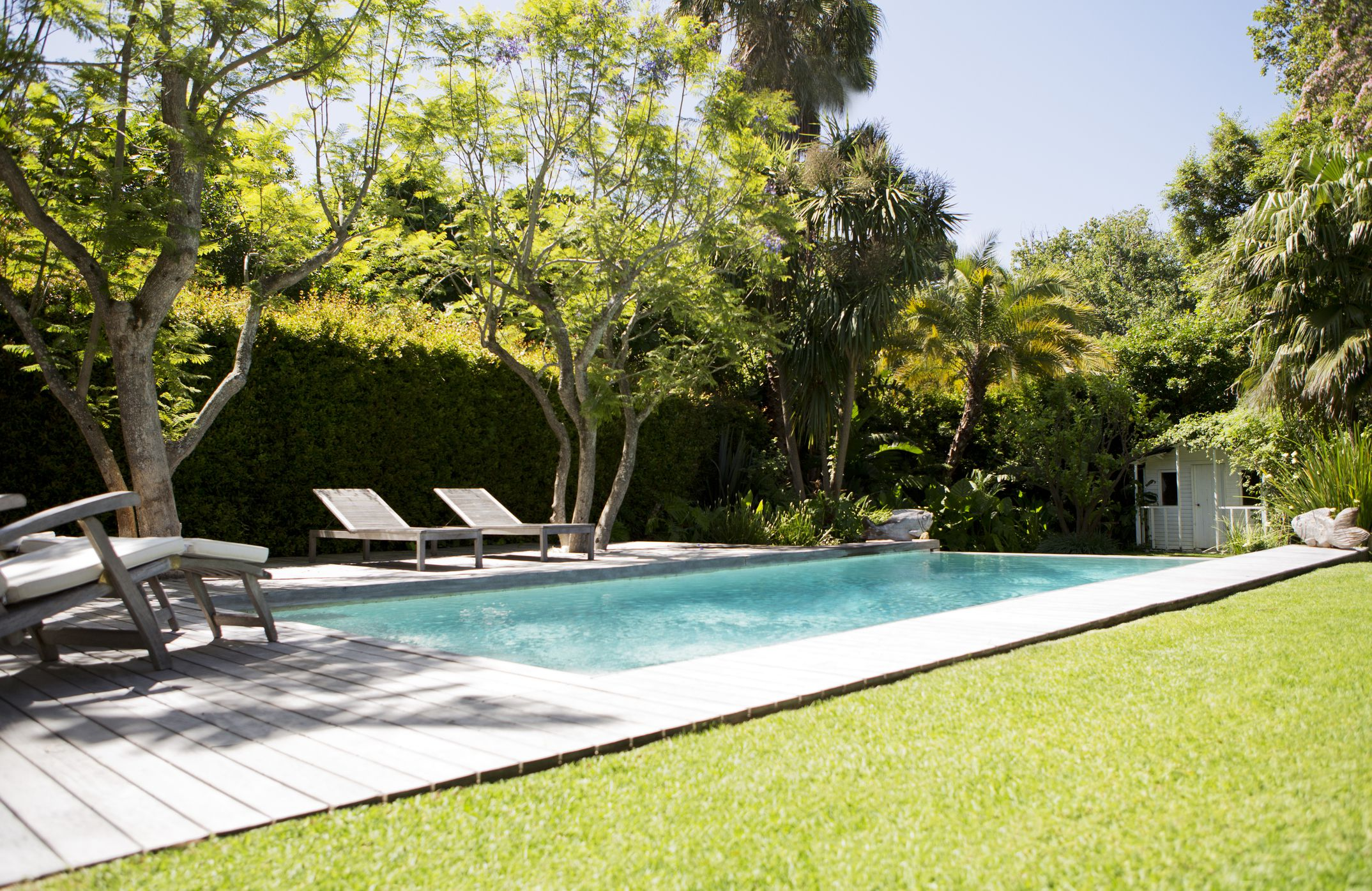 trees and lounge chairs by pool