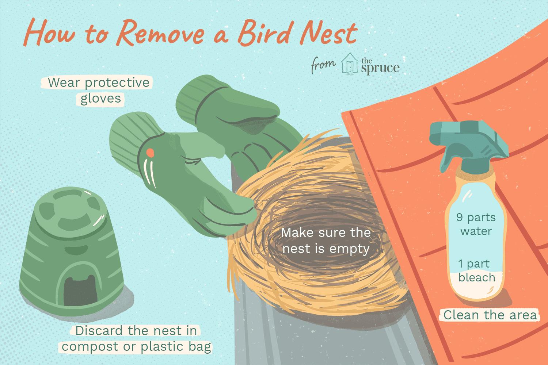 Removing Bird Nests