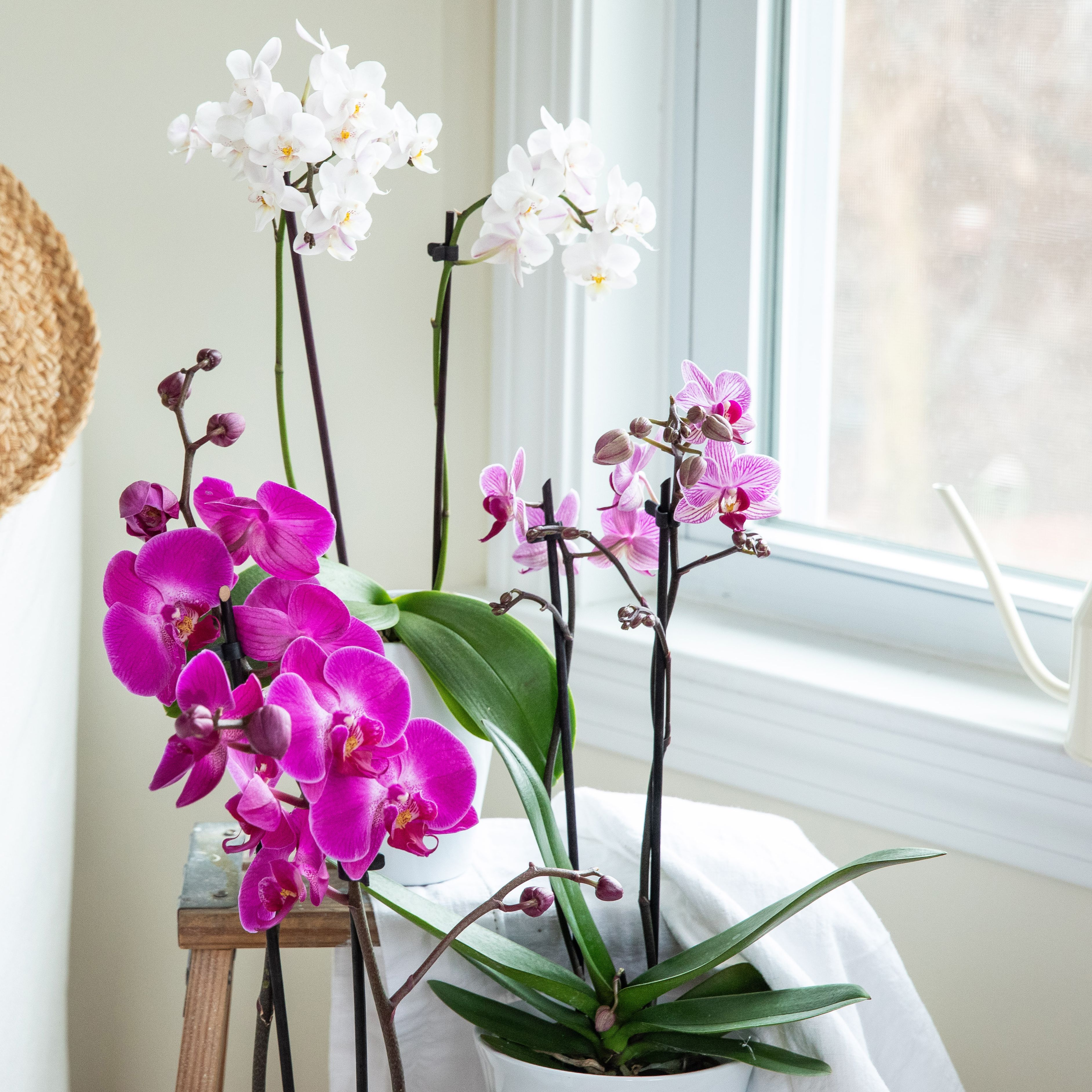How To Water Orchids Correctly