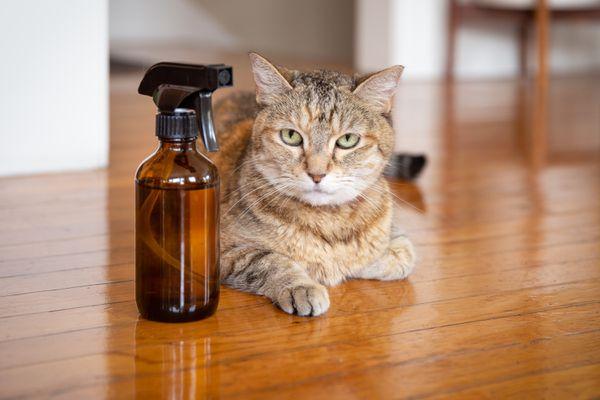 cat near flea repellent