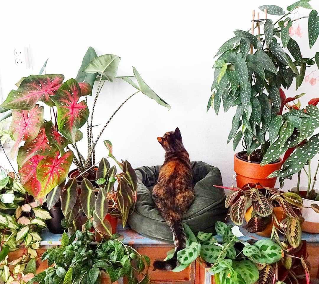 A cat sitting among plants