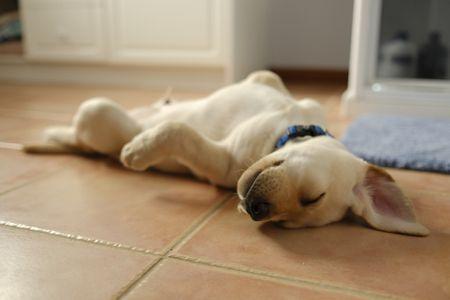 Pet Friendly Floors