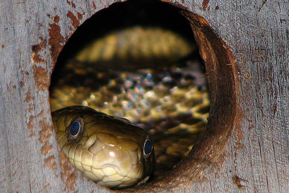 protecting birdhouses from predators cats snakes raccoons