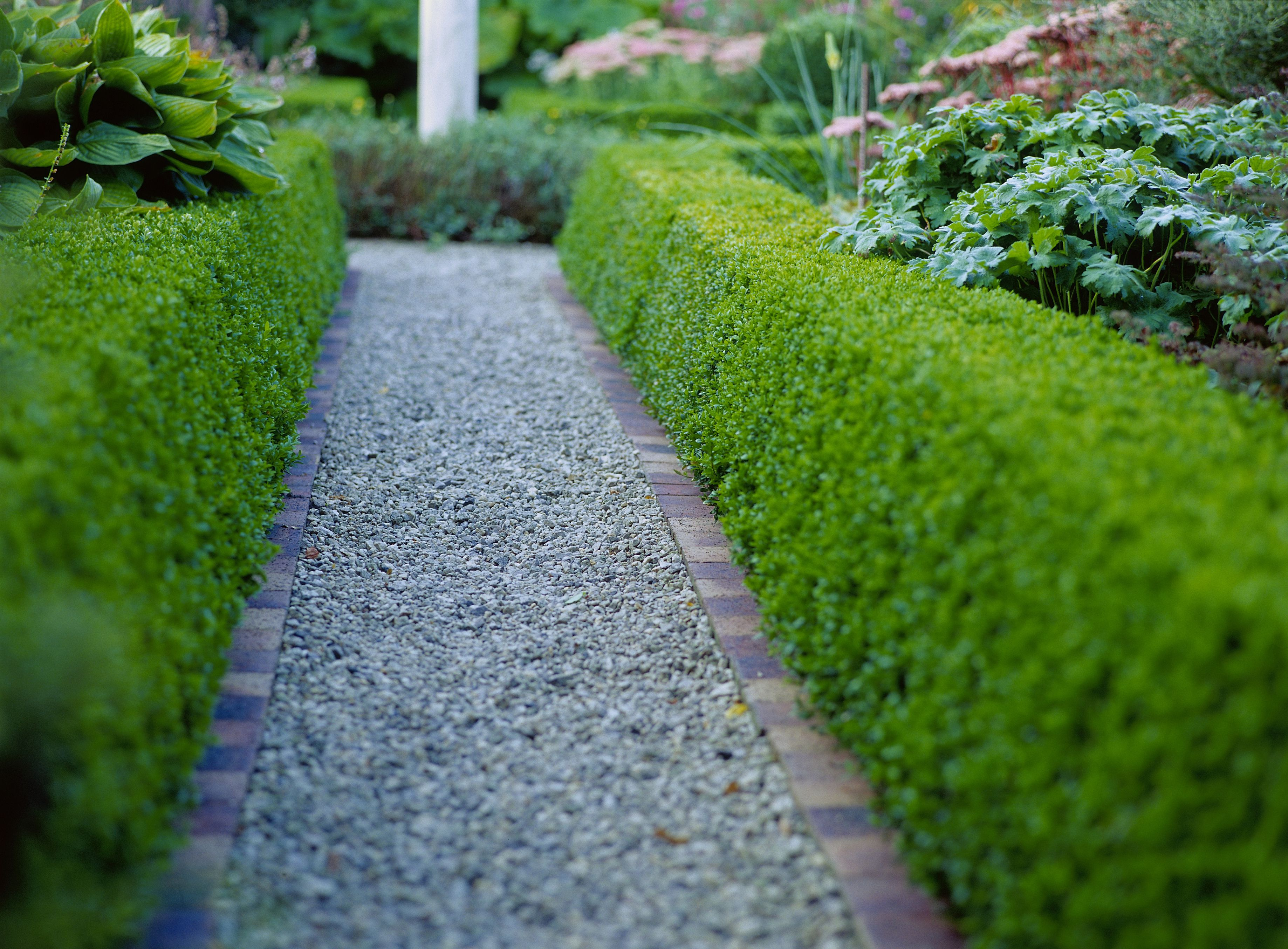 The Best Shrubs For Making Hedges