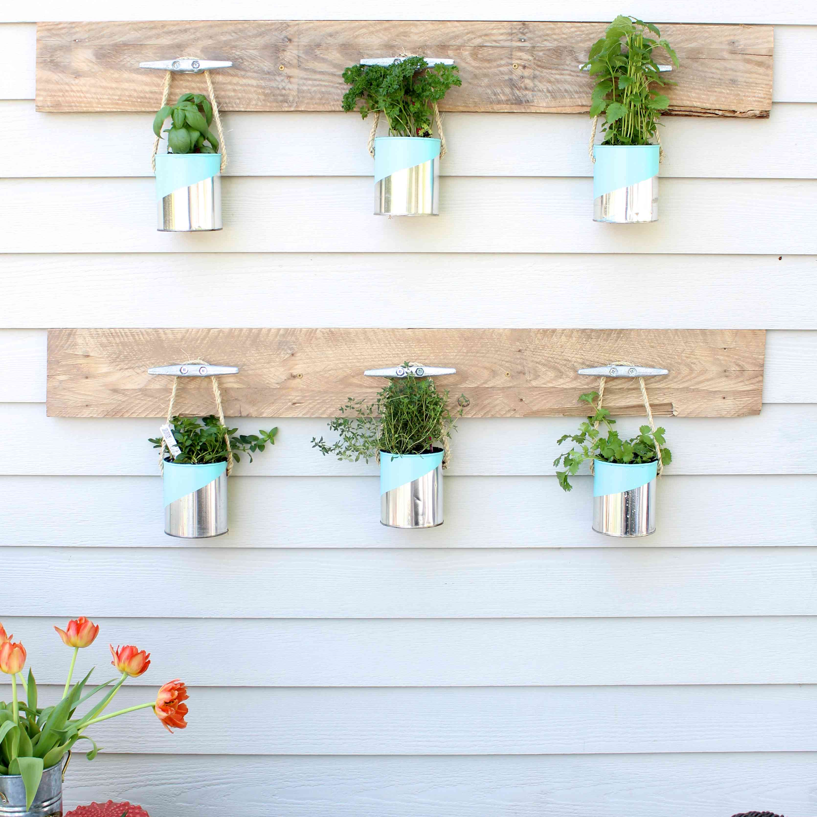 A paint can herb garden