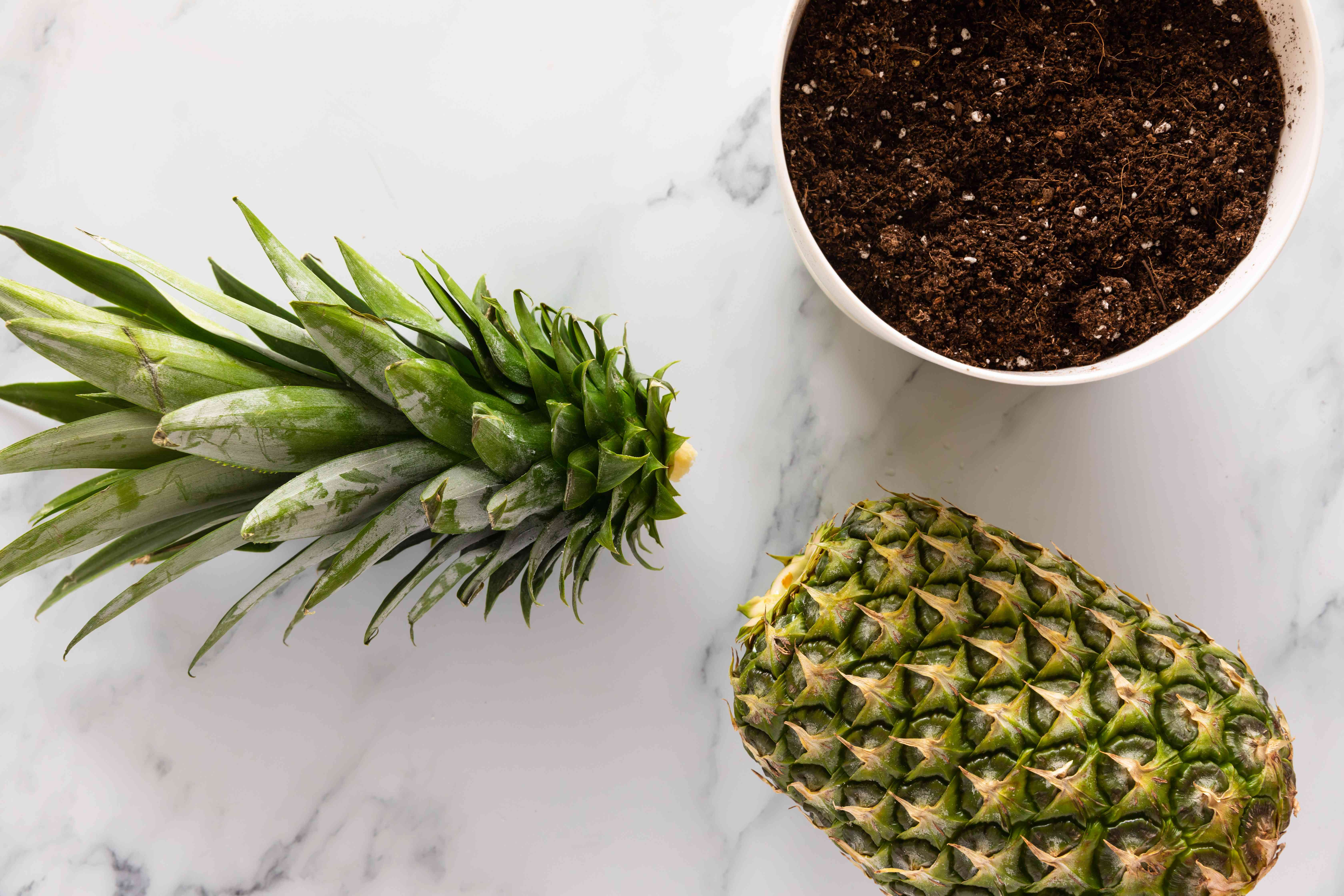 top of a pineapple cut off and ready to be planted