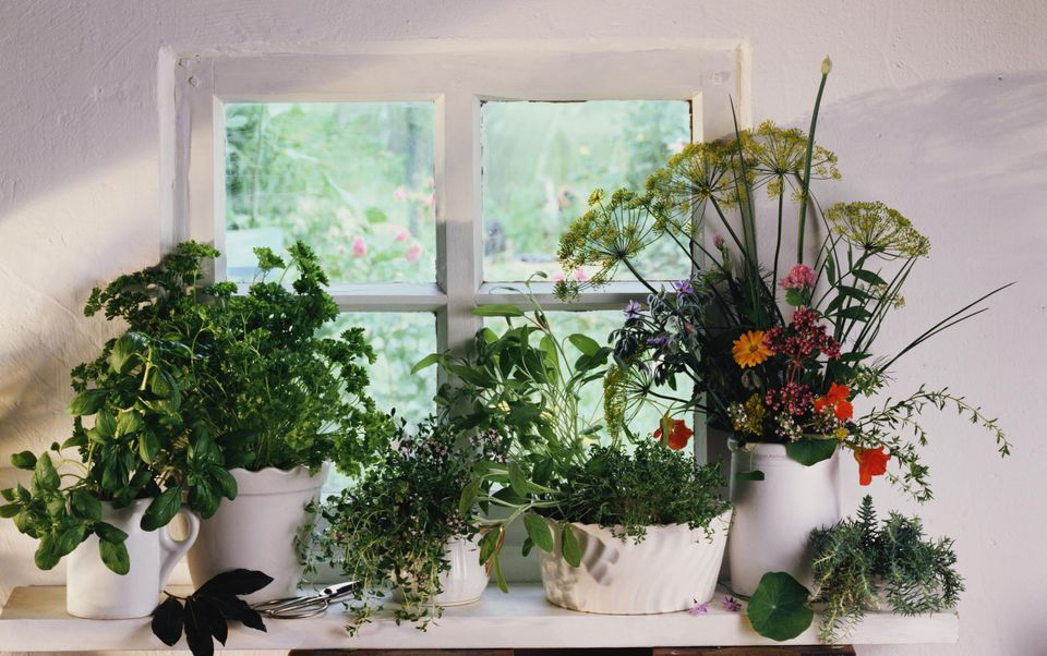 Assorted herbs on windowsill