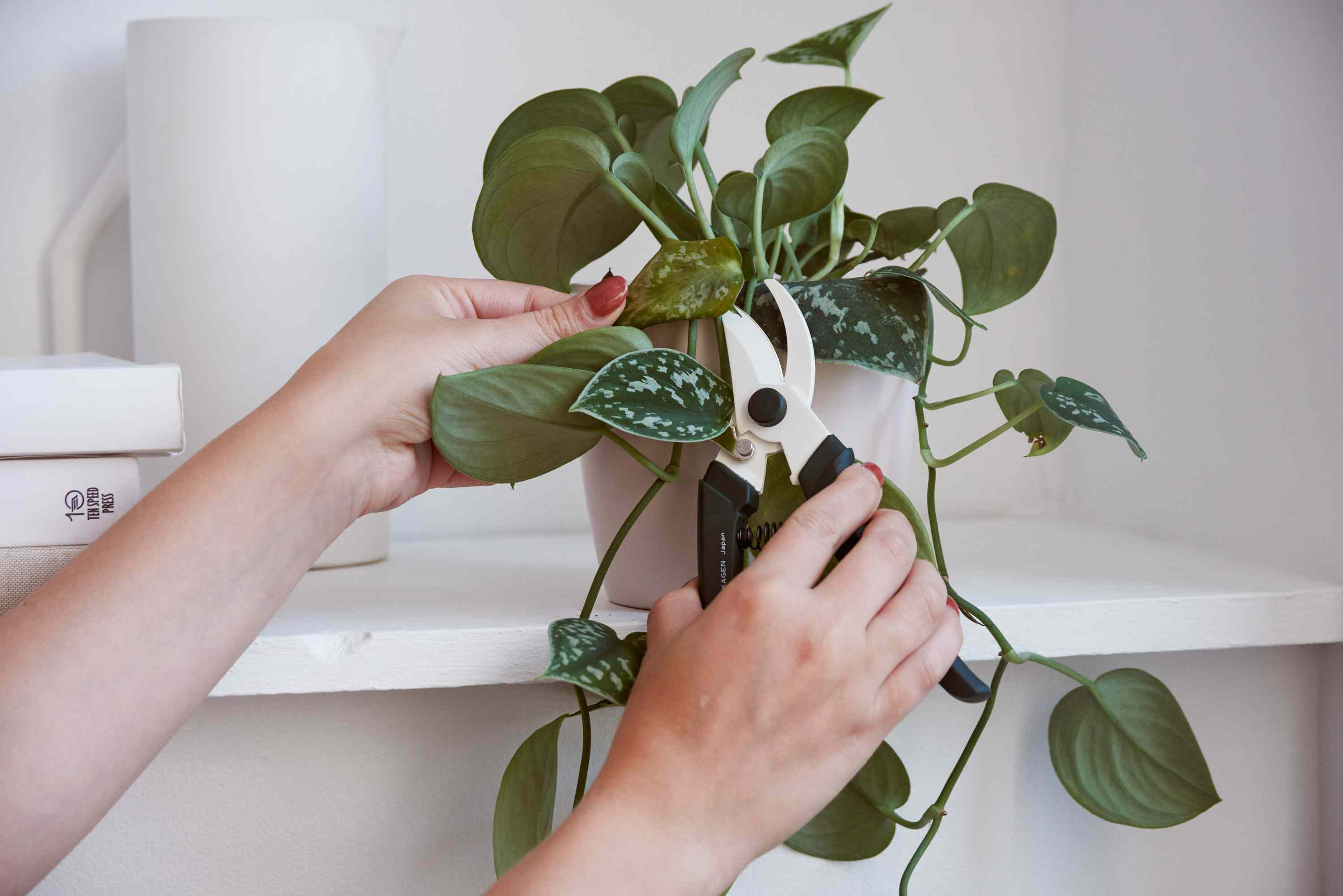 removing a dead leaf from a houseplant