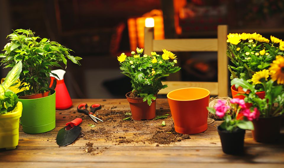 Transplanting pot flowers plant on table