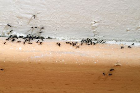 Magnificent 9 Simple Steps To Get Rid Of Ants And Keep Them Out Download Free Architecture Designs Jebrpmadebymaigaardcom