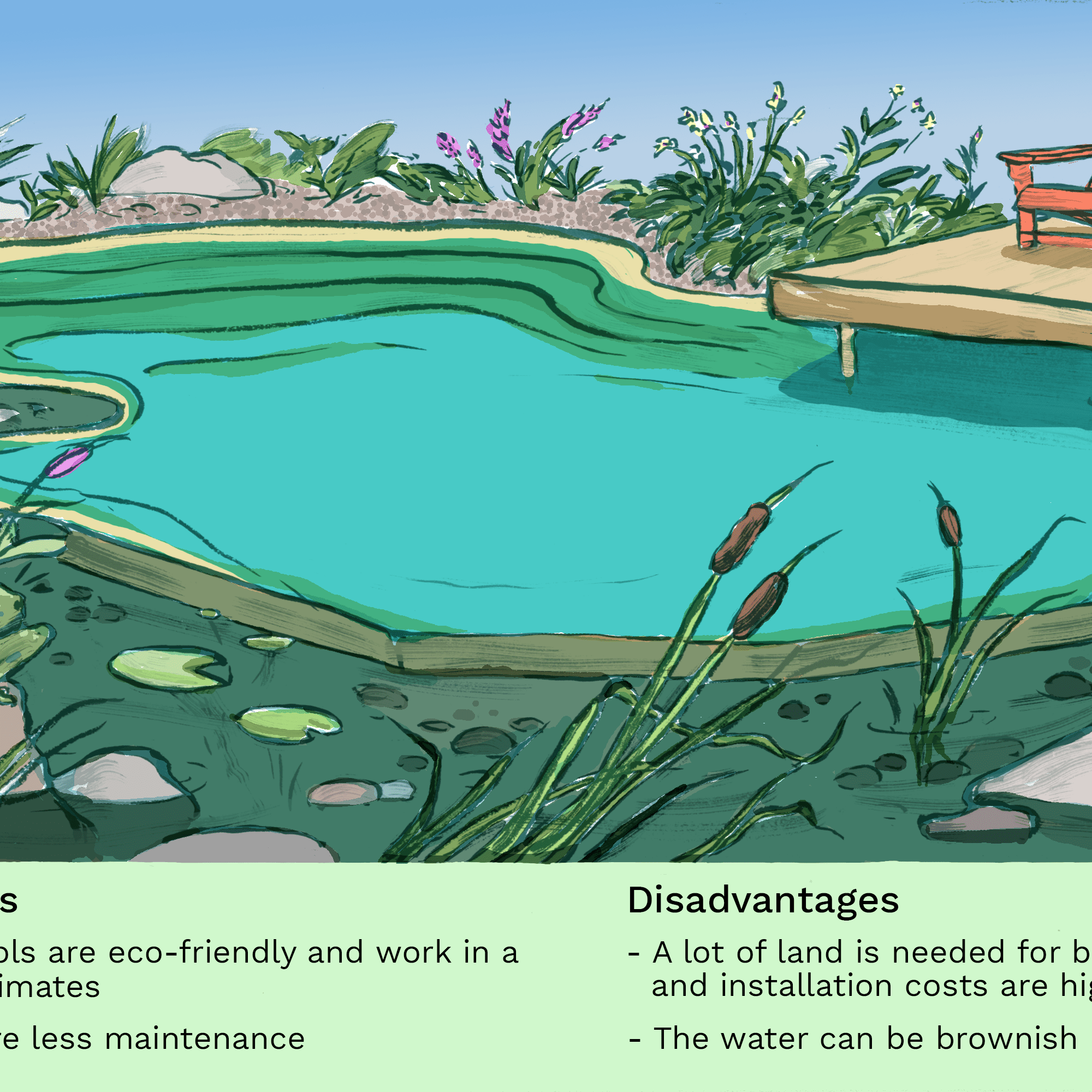 The Pros And Cons Of Owning A Natural Pool