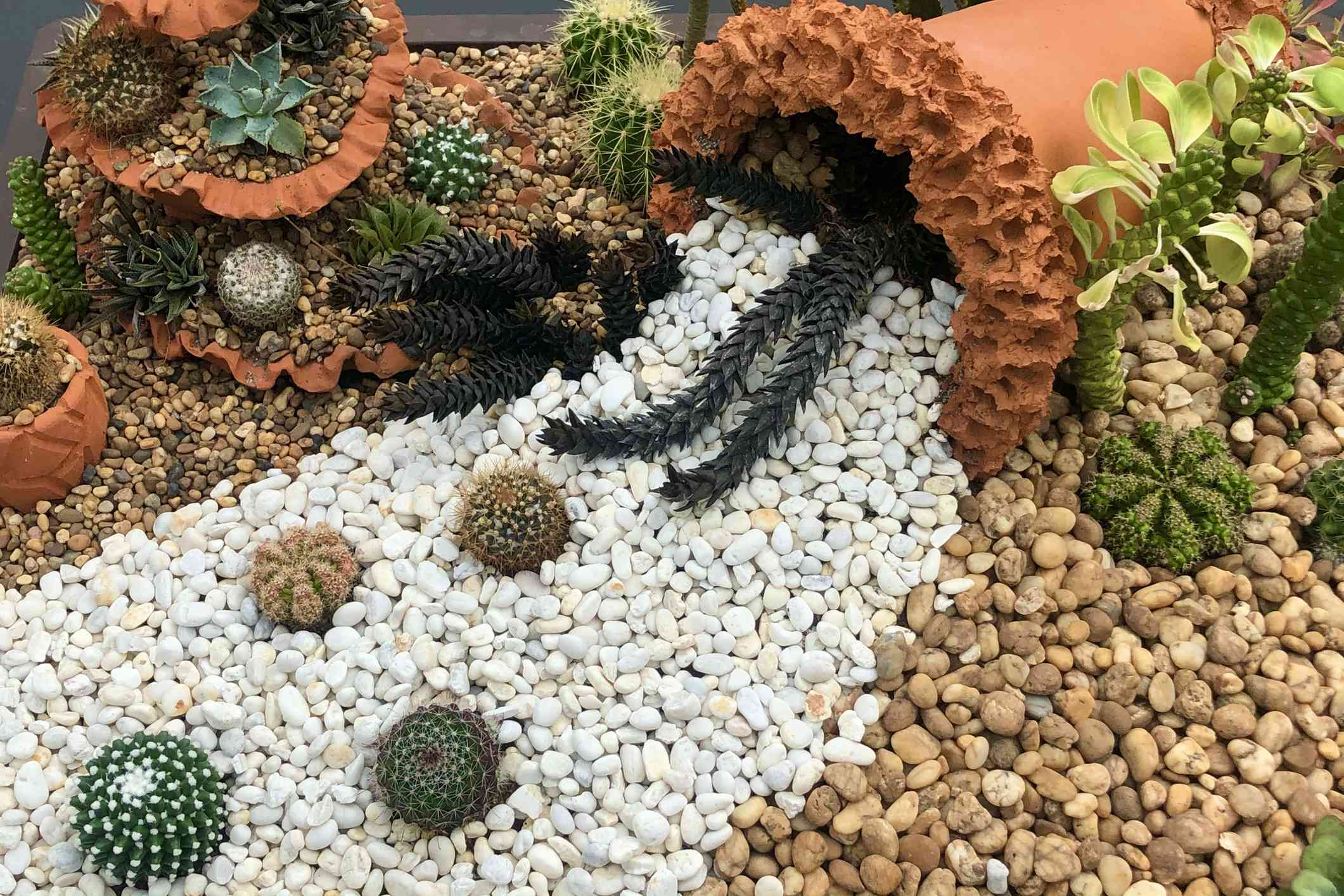 A rock garden with contrasting colors and succulents.