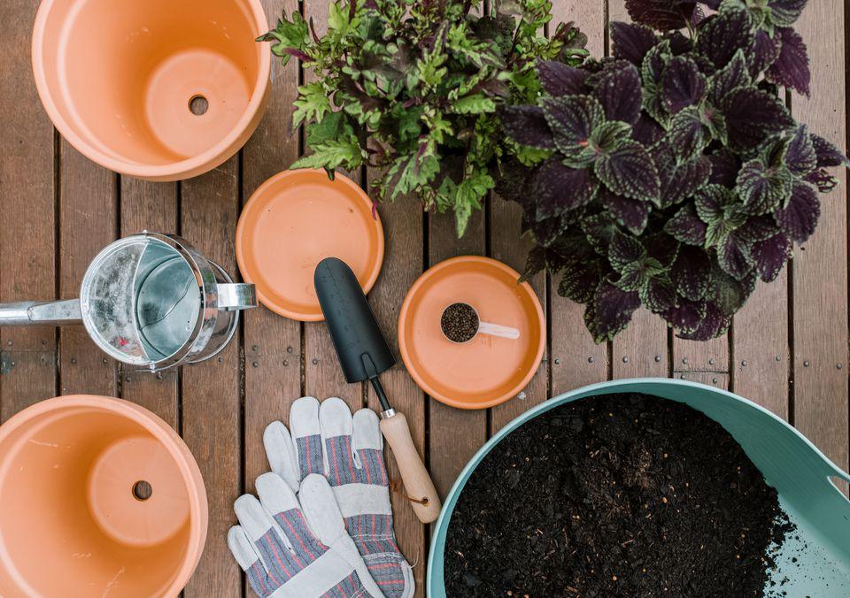 coleus plants on a patio