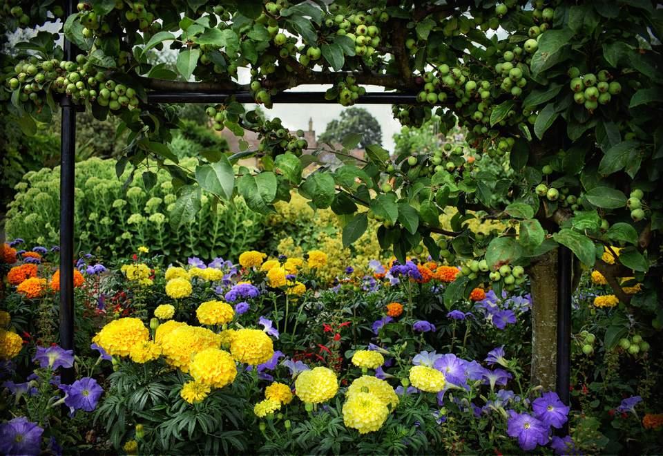 complimentary color garden