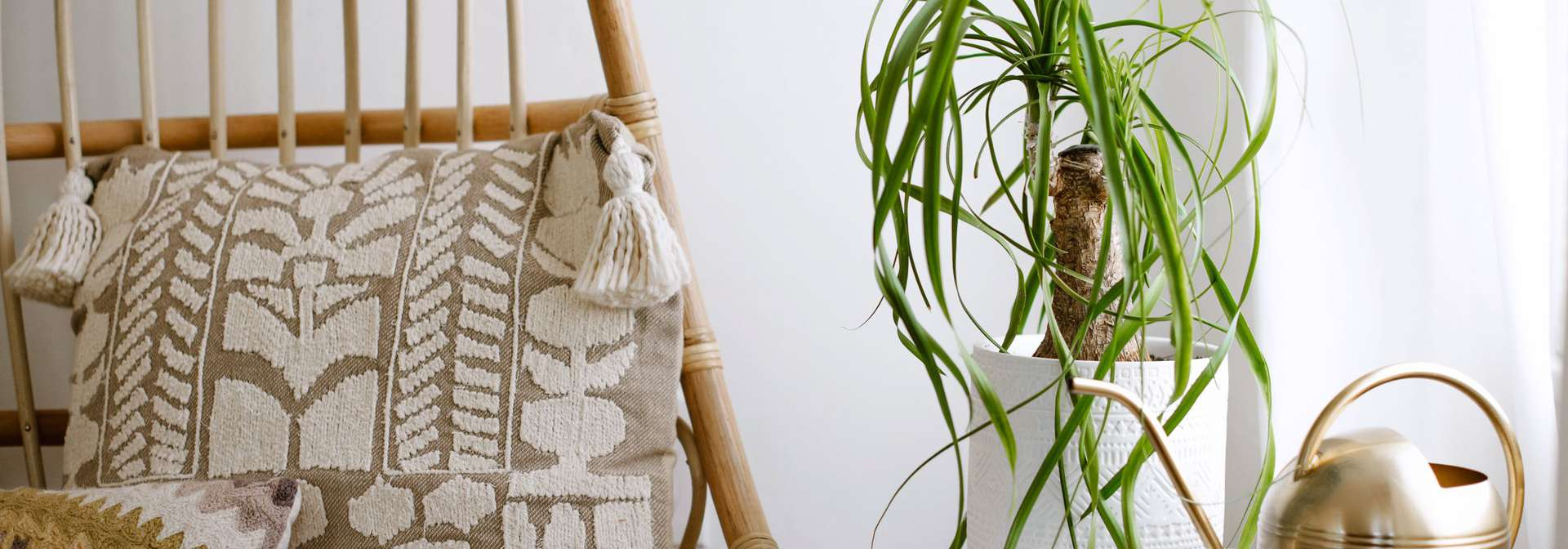 Ponytail palm tree in white pot near gold watering can and wicker chair with pillows