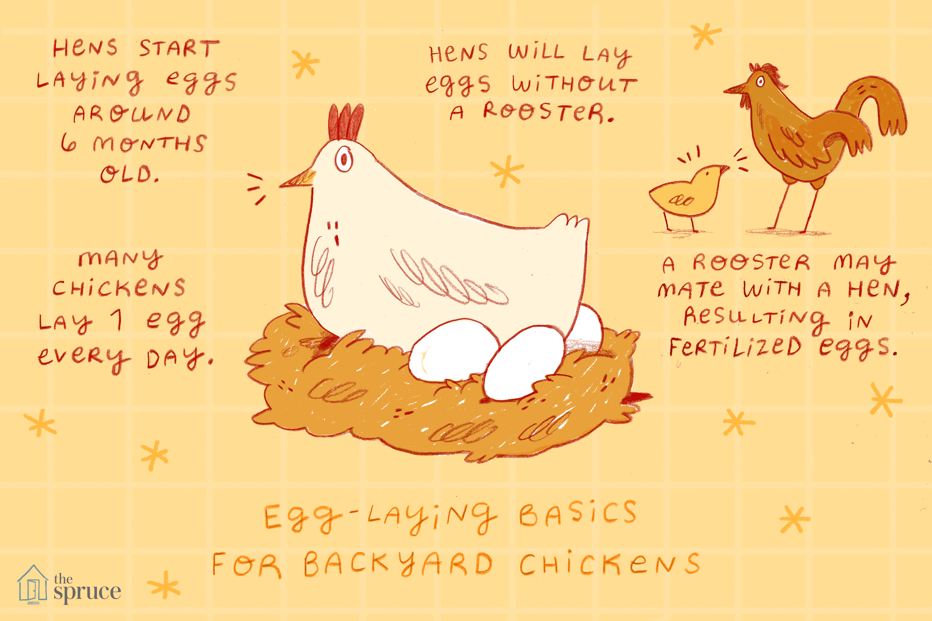 how to get chickens to lay eggs