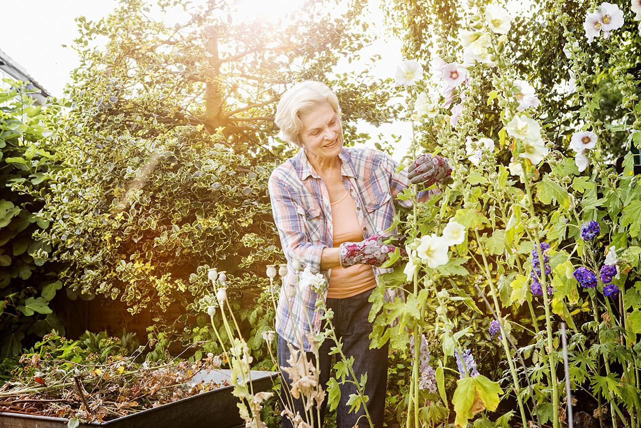 Prevent And Control Rust Fungus In Your Flower Garden