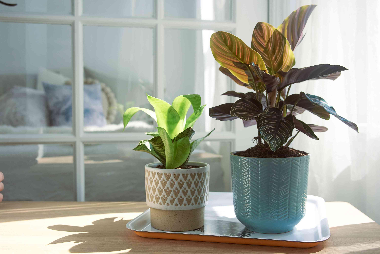 houseplants in a sunny spot