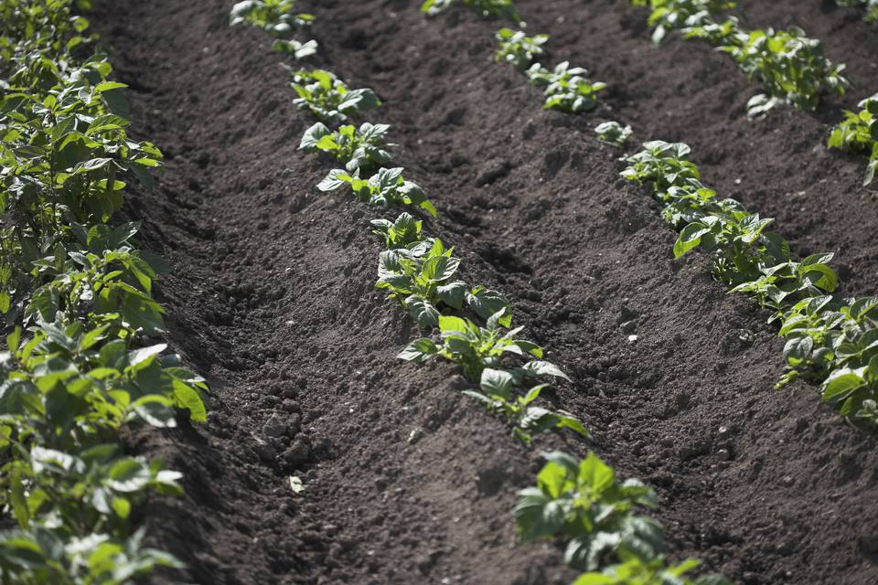 Keep Pests Out Of Your Vegetable Garden