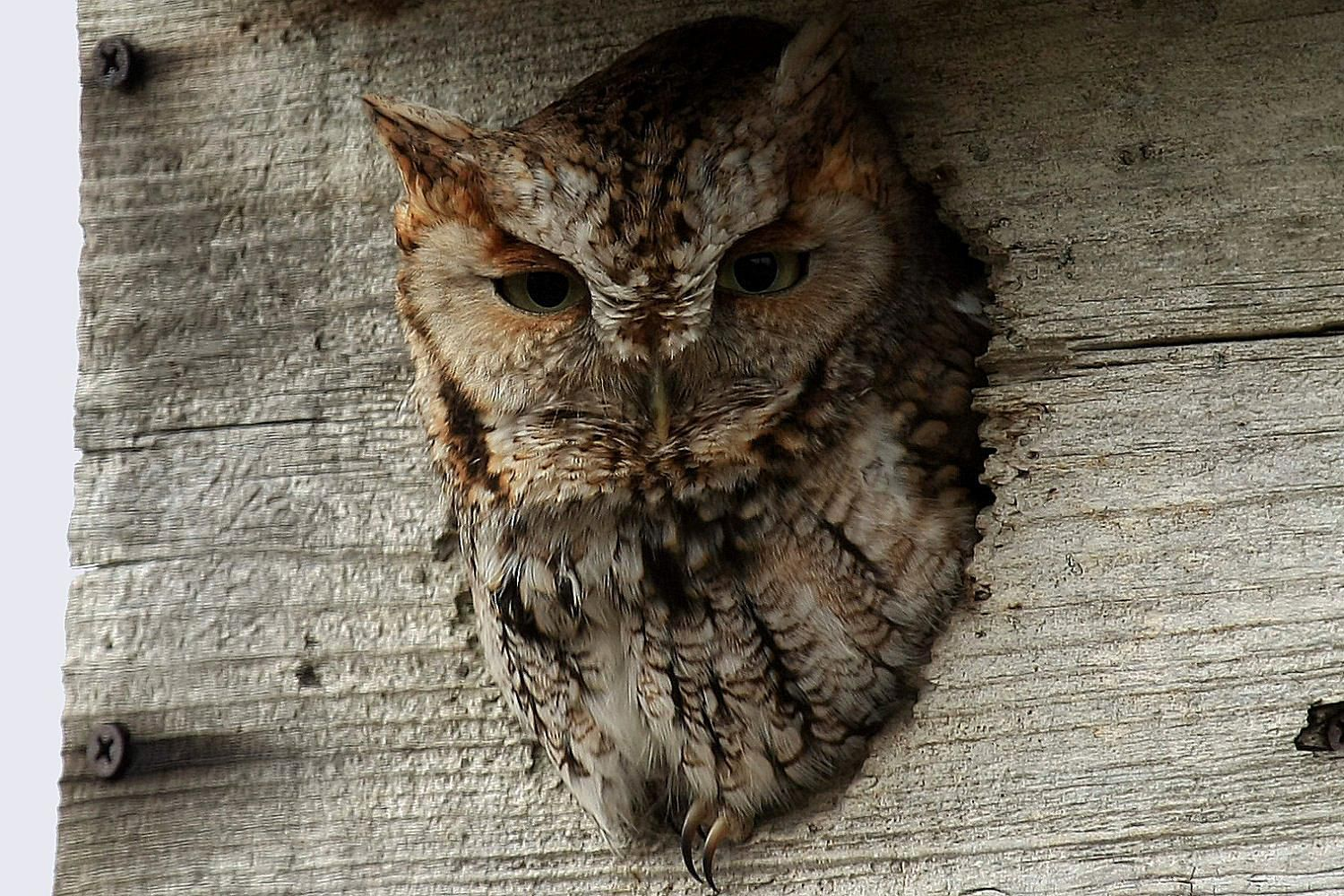 How to Attract Owls to Your Yard
