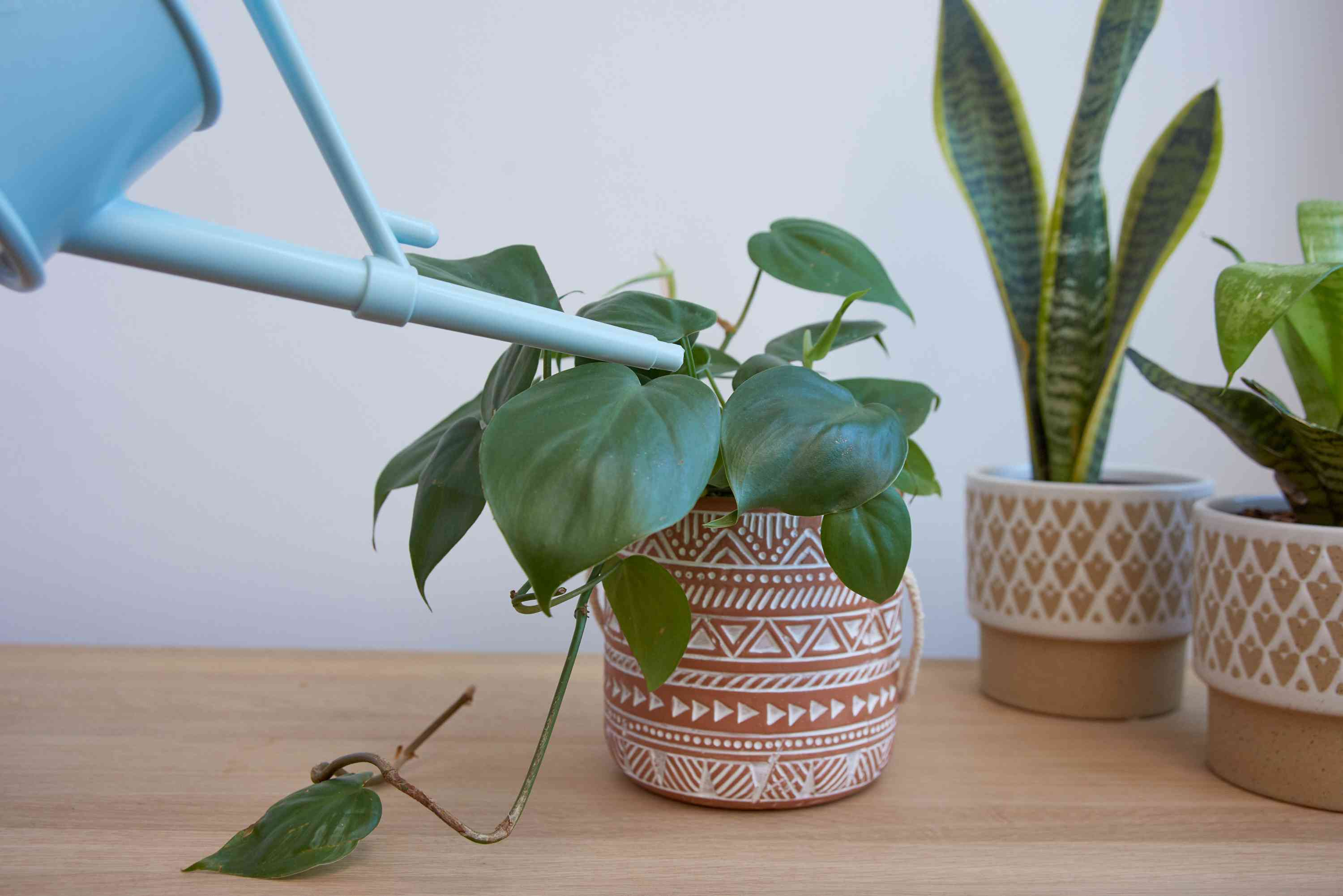 watering your houseplant