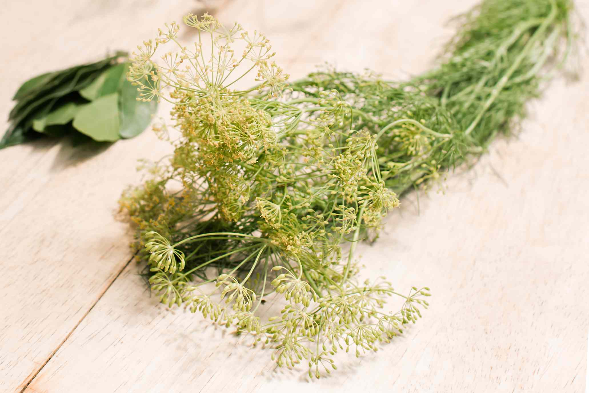 bundle of dill