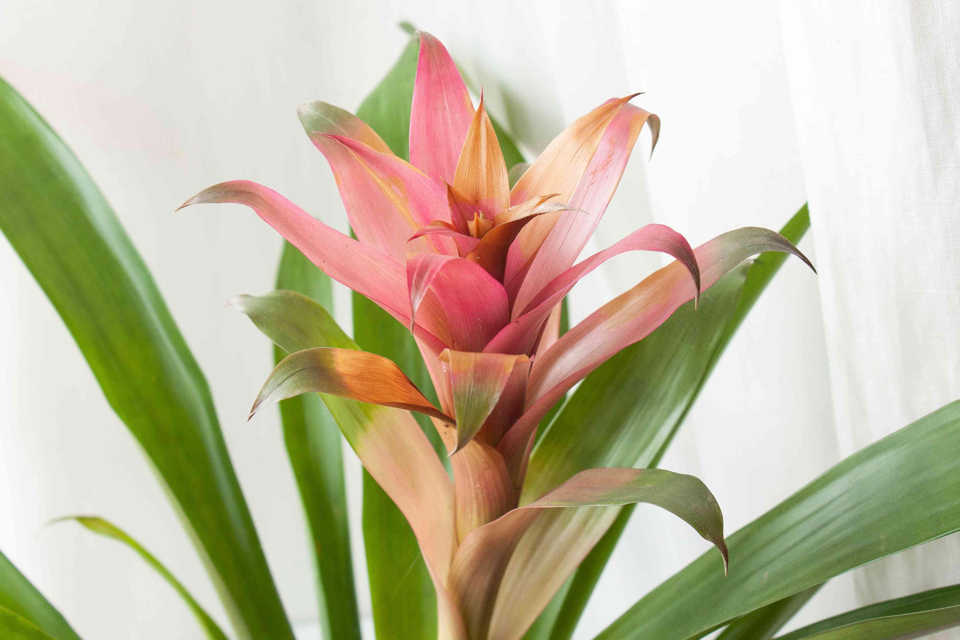 closeup of a bromeliad